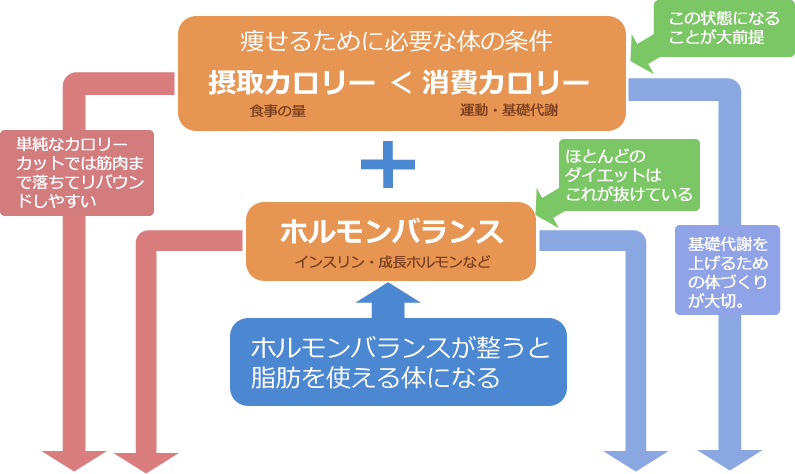 B3ダイエット理論図解-1